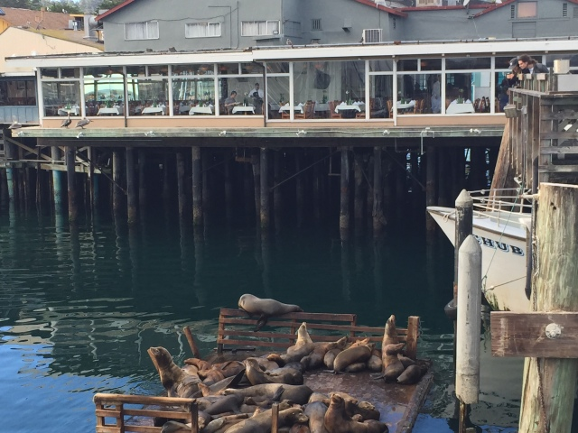 As did these seals.  Gotta love the guy keeping his distance on the railing.