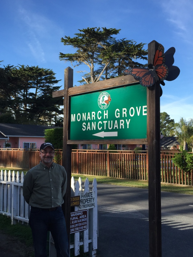 Bob used to catch Monarchs in the fields of his rural childhood home.  Do it in Pacific Grove and you get fined $1,500!!