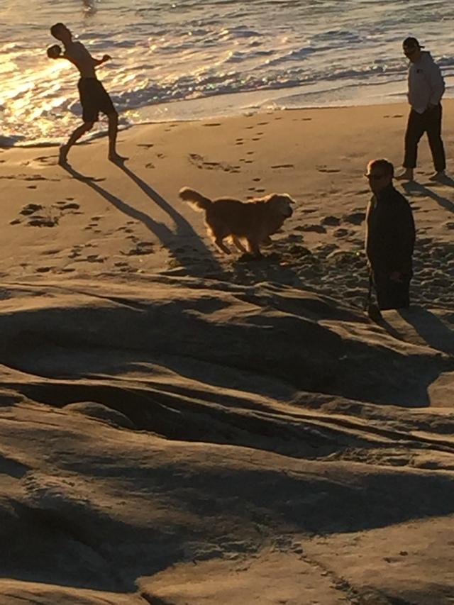 Playful Golden on the beach.....ah, the memories