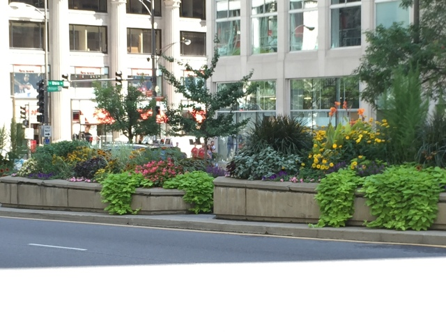 More Michigan Ave landscaping
