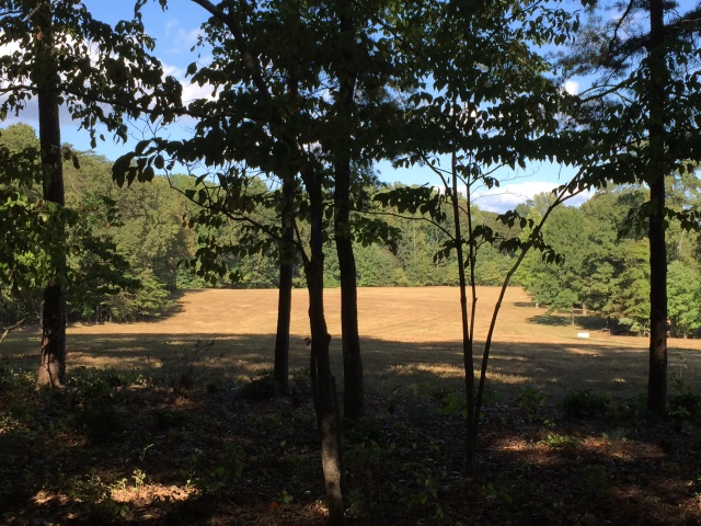 One of the battlefields in The Wilderness.  The 7th New York marched up this field toward Confederate fire from behind these trees.
